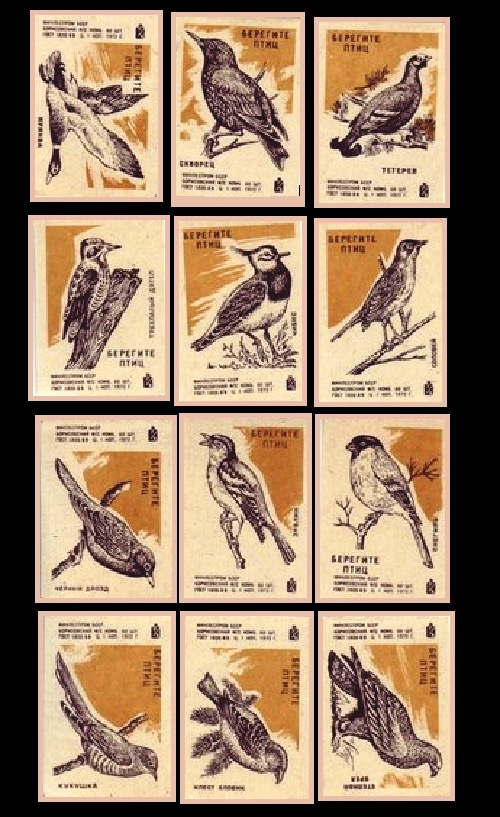 take care of how to take care of a bird