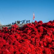 8500 red carnations to the Cruiser of the Revolution Aurora. 2017