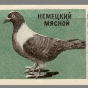 German meat pigeon. Pigeons species, 1963, green paper
