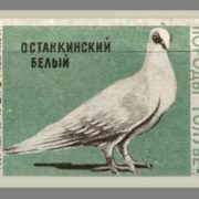 Ostankino white. Pigeons species, 1963, green paper