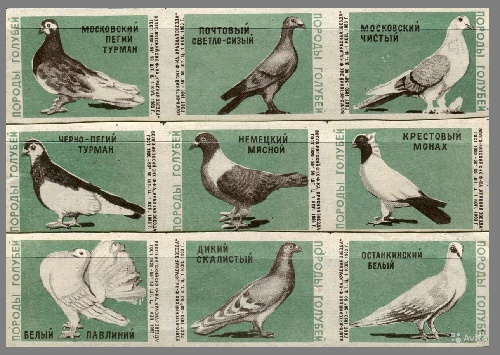 Pigeon species USSR matchbox labels, 1963, green paper