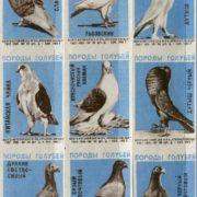 Pigeons species, 1963