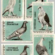 Pigeons species, 1965