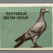 Post light bluish. Pigeons species, 1963, green paper