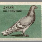 Wild rocky. Pigeons species, 1963, green paper