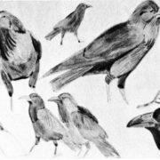 Sketch of black crow