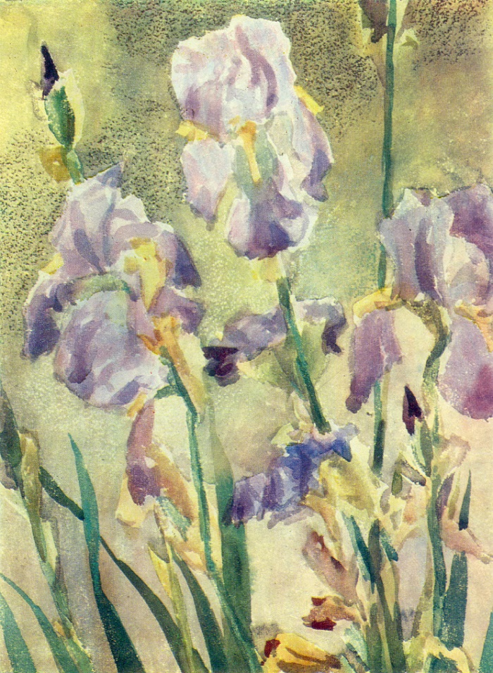 Irises. 1971