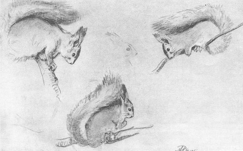 A. Rylov. Squirrels. Pencil