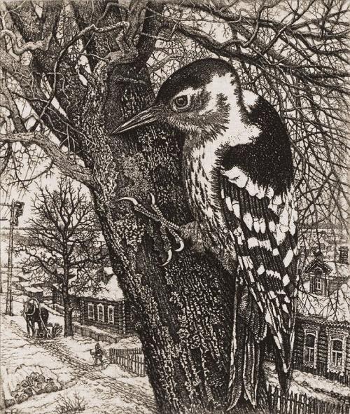 Woodpecker. Paper-etching. 1981. Soviet artist Stanislav Mikhailovich Nikireyev (07.11.1932 - 24.08.2007)