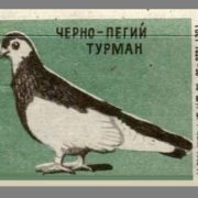 Black-and-piebald Thurman. Pigeons species, 1963, green paper