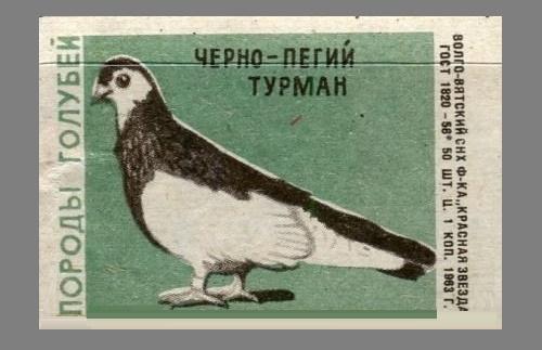 Black-and-piebald Thurman. Pigeons species, 1963, green paper