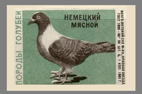 German meat pigeon. Pigeons species, 1963, green paper