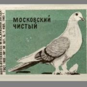 Moscow clean. Pigeons species, 1963, green paper
