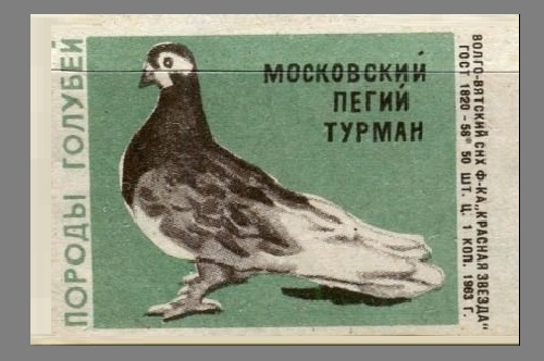 Moscow piebald Thurman. Pigeons species, 1963, green paper