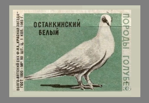 Ostankino white. Pigeons species, 1963, green paper