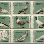 Pigeon species USSR matchbox labels