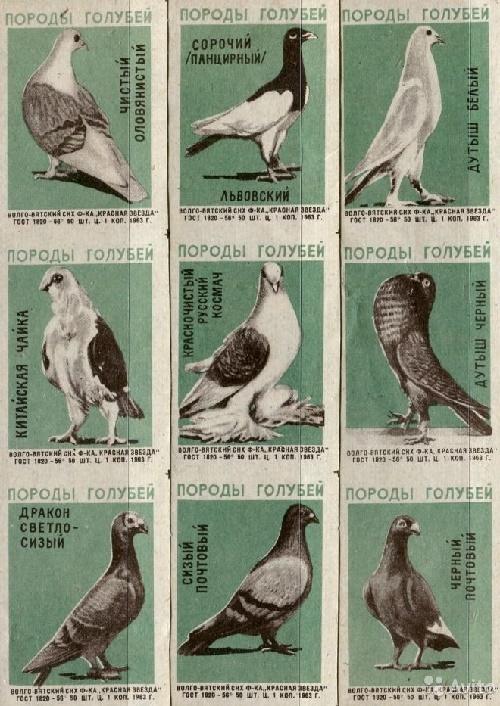 Pigeons species, 1963, green paper