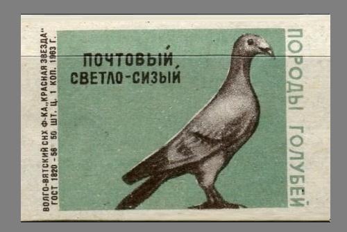 Post light bluish. Pigeons species, 1963, green paper