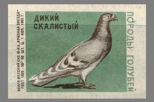 Wild rocky. Pigeons species, 1963, green paper