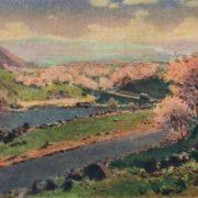 Uryuk (Apricot) blooms. 1961