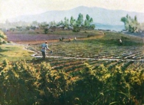 Watering the cotton. 1949