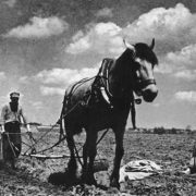 In the field. Ukraine. 1935
