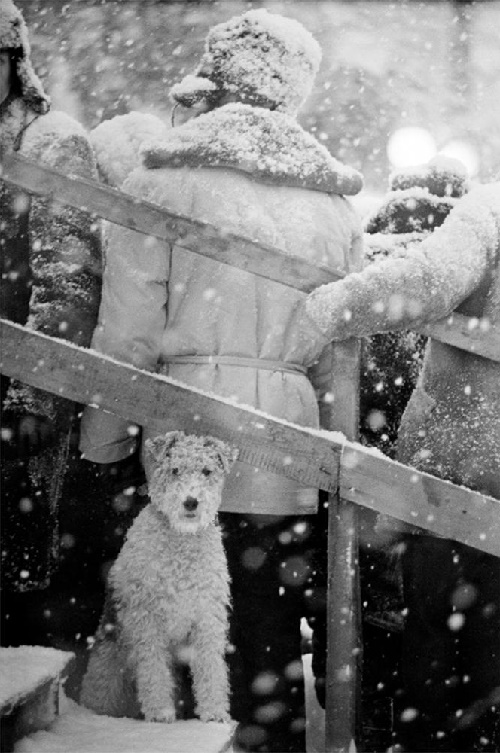 It's not my dog business. 1965. Soviet photographer Vladimir Bogdanov