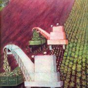 Sugar will be. 1975. O.S. Leonova