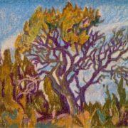 Old tree. 1973