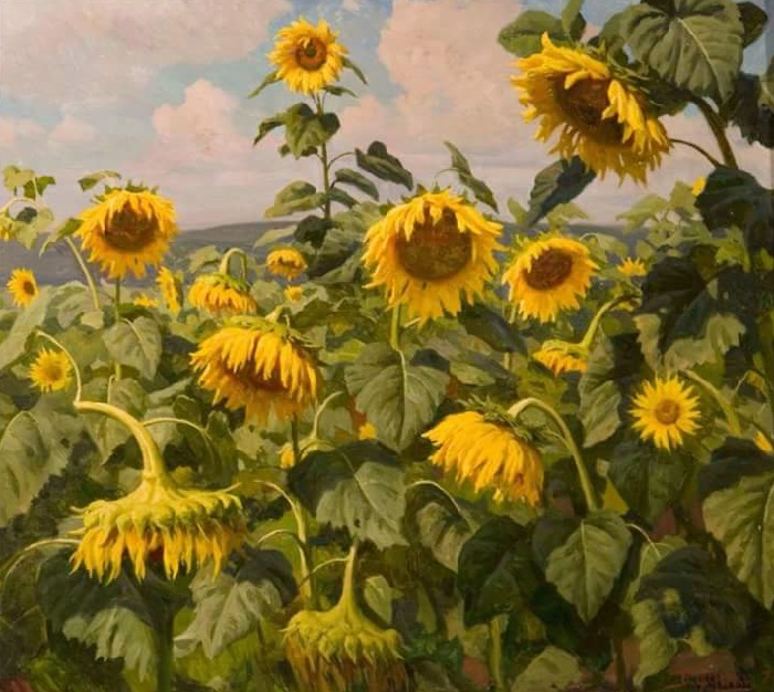 Sunflowers growing. Cardboard, oil. 1970. Toliyatti art museum