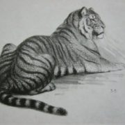 A tiger, drawing