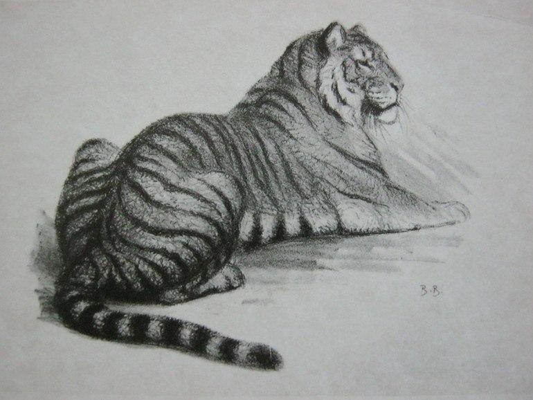 A tiger, drawing