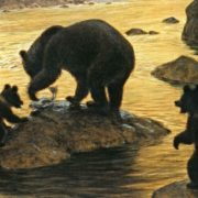 Bears hunting for fish