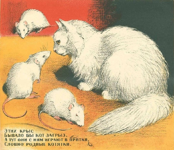 White rats and a cat