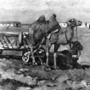 Camels. Kazakhstan. Etude